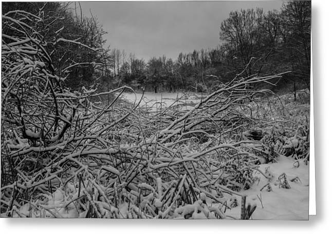 Forestland; Hills Greeting Cards - WinterForest Greeting Card by Miguel Winterpacht