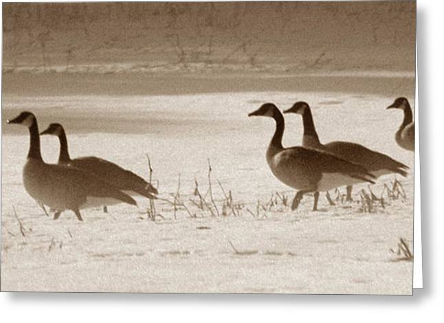 Photos Of Birds Greeting Cards - Wintering Geese Greeting Card by Skip Willits