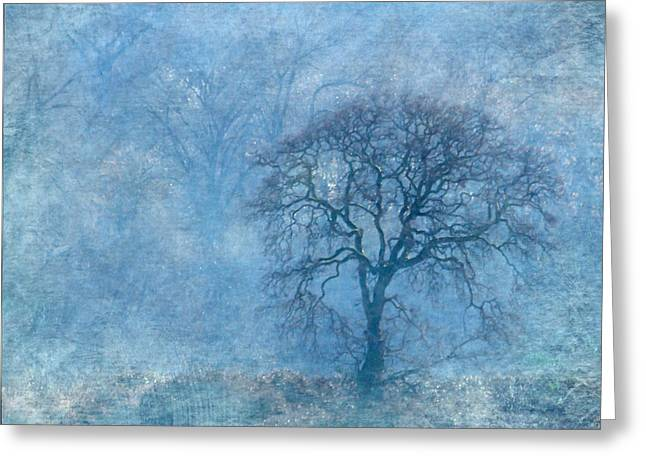 Bare Oak Tree Greeting Cards - Wintering Oak Greeting Card by Angie Vogel
