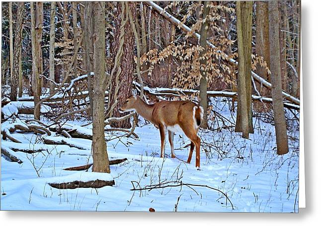Indiana Winters Digital Art Greeting Cards - Wintering Whitetail Greeting Card by BackHome Images