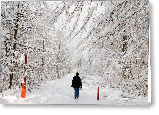 Woodland Scenes Greeting Cards - Winterly forest with snow covered trees Greeting Card by Matthias Hauser