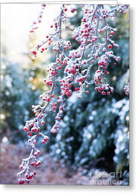 Snow-covered Landscape Greeting Cards - Winters Beauty Greeting Card by Alana Ranney