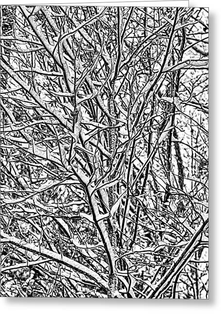 Winters Branches Greeting Card by John Haldane