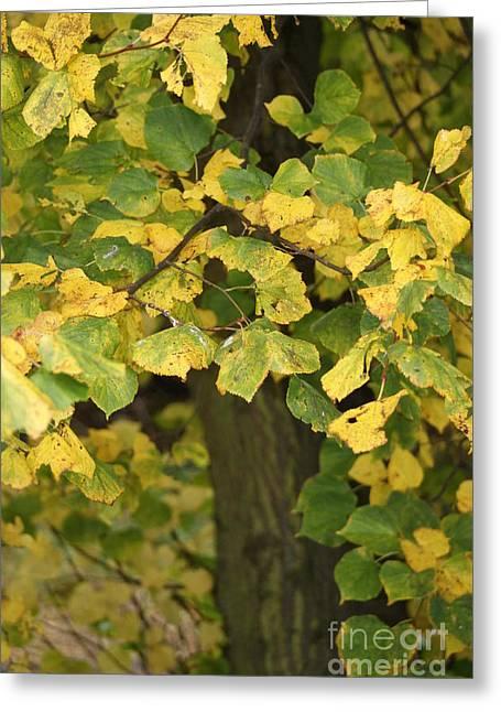 Turning Leaves Greeting Cards - Winters Dawn 6 Greeting Card by Carol Lynch
