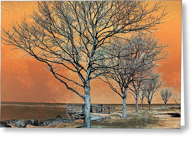Winter's Dawn Greeting Card by Shawna  Rowe