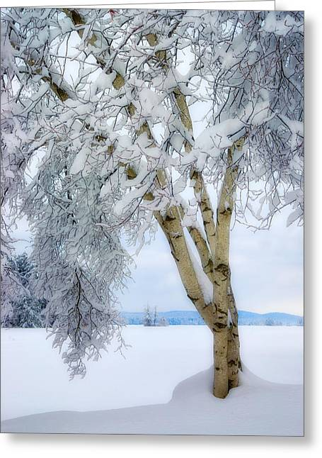 Winter's Dream Greeting Card by Darylann Leonard Photography