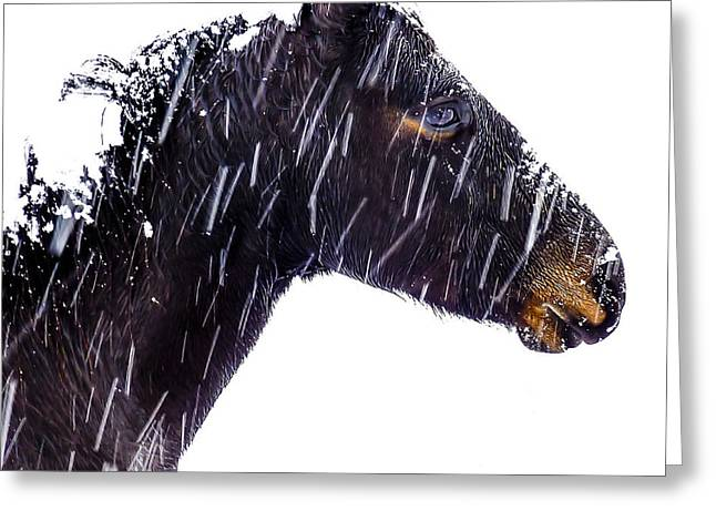 Beautiful Equine Photos Fine Art Greeting Cards - Winters Dream Greeting Card by William Groah