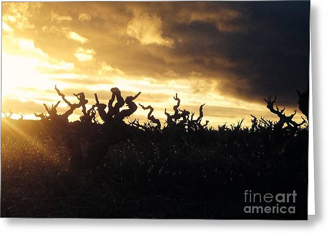 Wine Tour Greeting Cards - Winters Eve in the Vineyard Greeting Card by France  Art