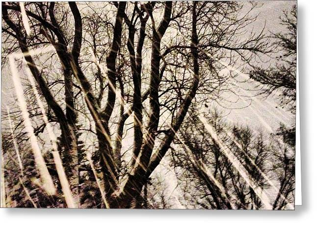 Snowy Evening Greeting Cards - Winters Eve Greeting Card by Tory Stoffregen