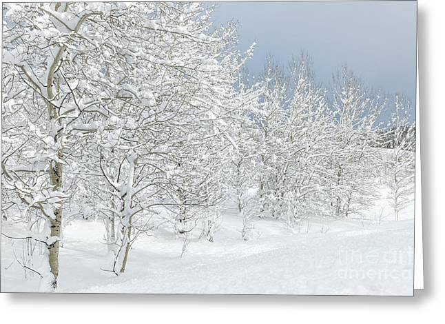 Snow-covered Landscape Greeting Cards - Winters Glory - Grand Tetons Greeting Card by Sandra Bronstein