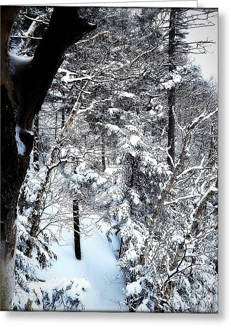James Powders Greeting Cards - Winters Glory Greeting Card by James Aiken