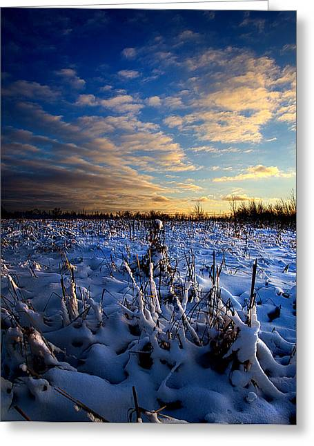 Geographic Greeting Cards - Winters Kiss Greeting Card by Phil Koch