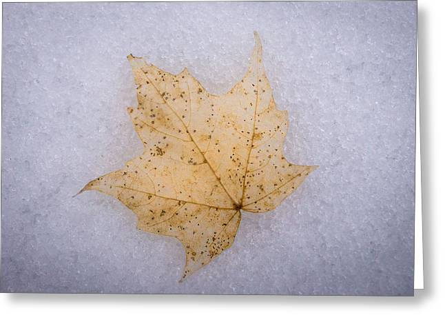 Drain Greeting Cards - Winters Leaf Greeting Card by Bill Pevlor