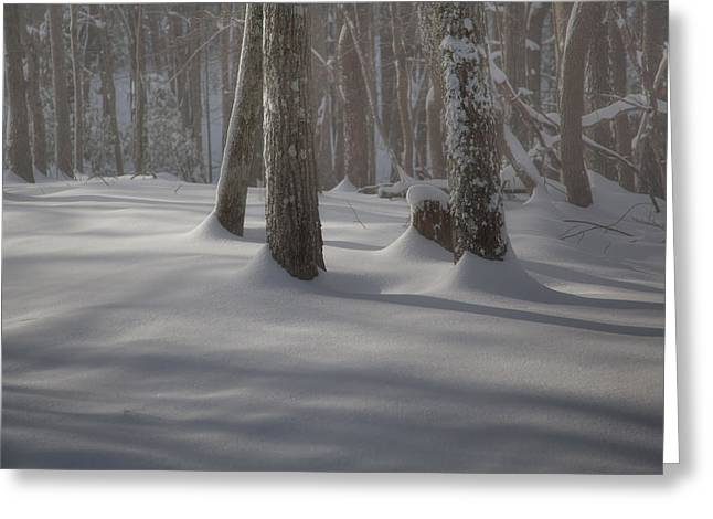 Snow Drifts Greeting Cards - Winters Light Greeting Card by Rob Travis