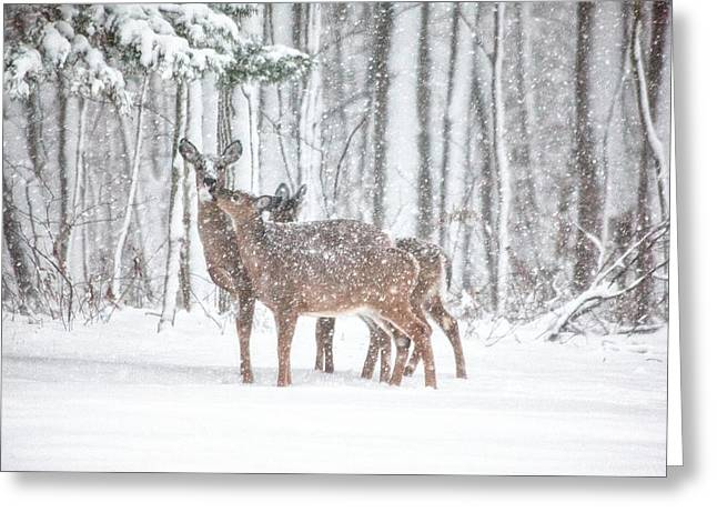 Connecticut Wildlife Greeting Cards - Winters Love Greeting Card by Karol  Livote
