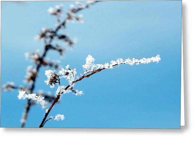 Wintry Greeting Cards - Winters Magic Wand Greeting Card by Karen Cook