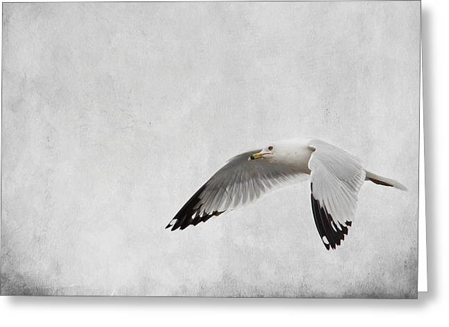 Larus Delawarensis Greeting Cards - Winters Return - Wildlife - Seagull Greeting Card by Jai Johnson