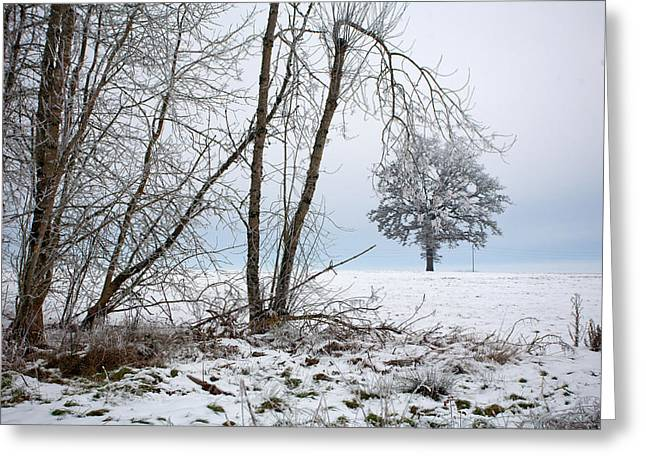Winter Prints Greeting Cards - Winters Wake Greeting Card by Bonnie Bruno