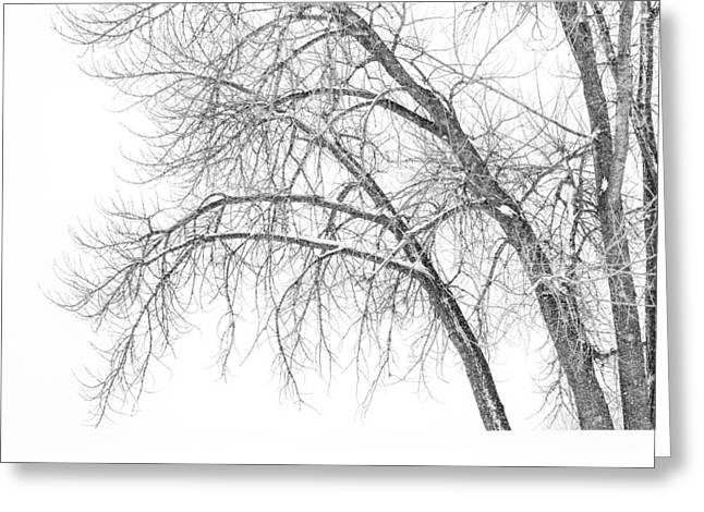 Winter Scenery Greeting Cards - Winters Weight Greeting Card by Darren  White