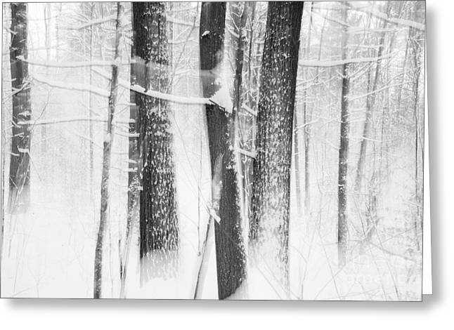 Sue Oconnor Greeting Cards - Winters Whisper Greeting Card by Sue OConnor