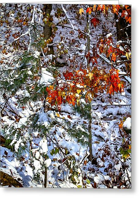 Wintry Mix Greeting Card by John Haldane