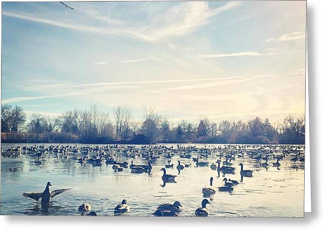Fort Collins Greeting Cards - Wintry Morning on the Lake Greeting Card by Brittany  Carlson