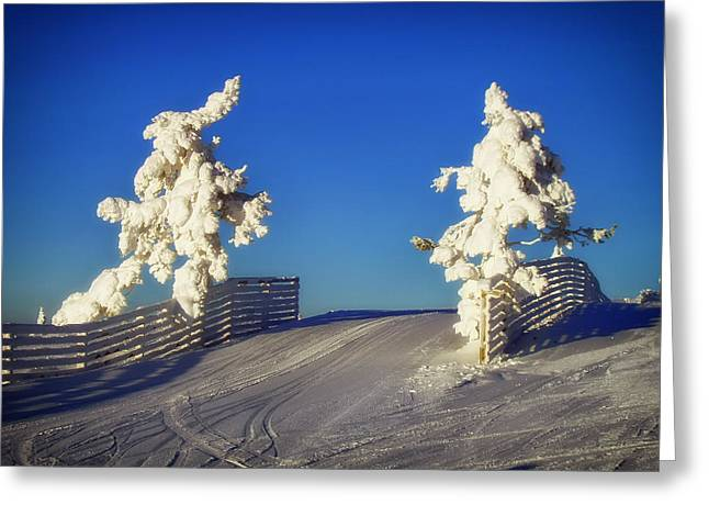 Snow-covered Landscape Greeting Cards - Wintry Sentinels  Greeting Card by Mountain Dreams