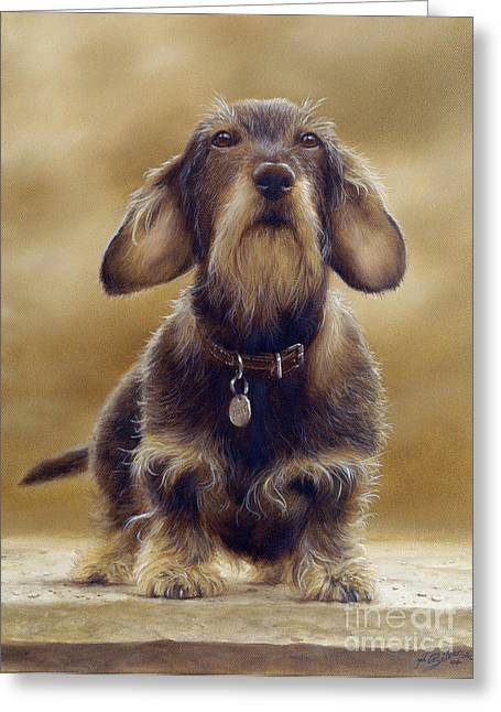 Collie Greeting Cards - Wire Haired Dachshund Greeting Card by John Silver