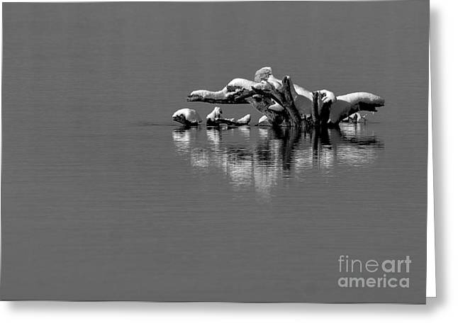 Wisconsin River Greeting Card by Steven Ralser