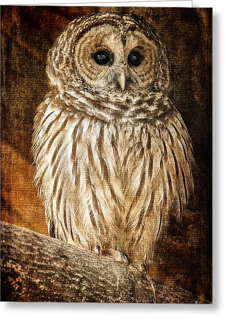 Wildlife Preserve Greeting Cards - Wisdom Greeting Card by Lois Bryan