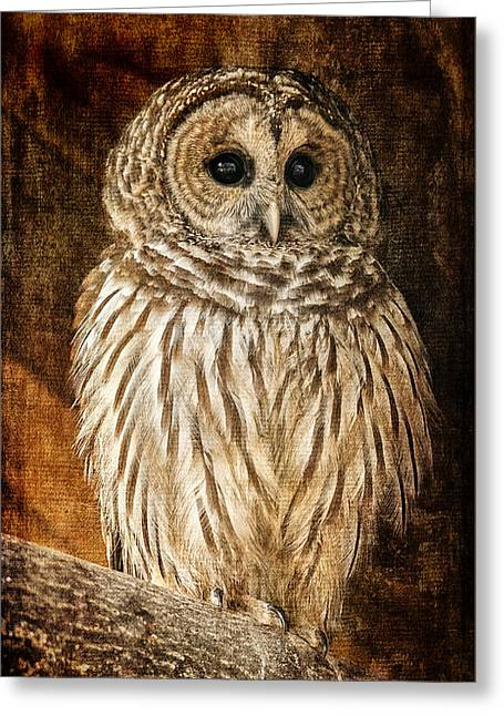 Barred Owl Greeting Cards - Wisdom Greeting Card by Lois Bryan