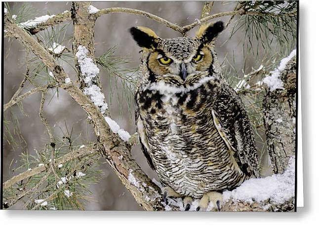 Owl Greeting Cards - Wise Old Great Horned Owl Greeting Card by LeeAnn McLaneGoetz McLaneGoetzStudioLLCcom