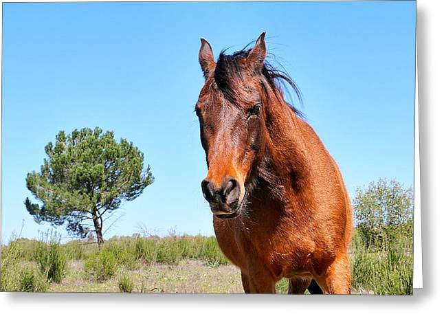 Souls Greeting Cards - Wise Old Mare Greeting Card by Maria Jansson