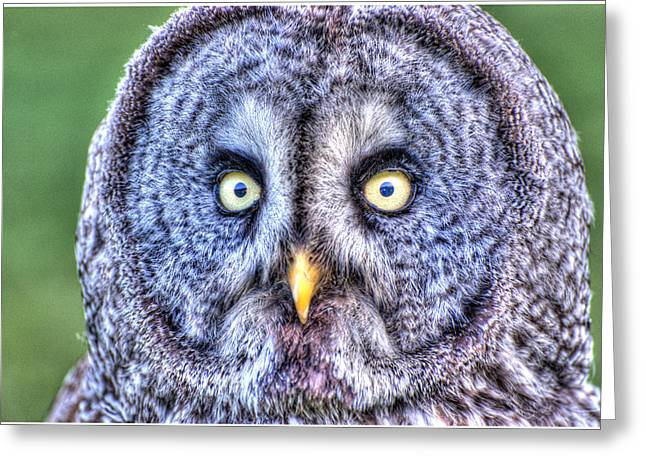 John Kennedy Greeting Cards - Wise Old Owl Greeting Card by John Kennedy