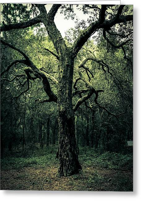Wise Old Tree Greeting Card by Robin Lewis