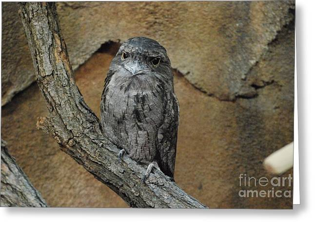 Wise Owl Greeting Card by Mark McReynolds
