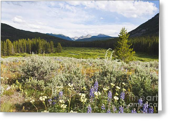 Big Pine Country Greeting Cards - Wise River Greeting Card by K Powers  Photography
