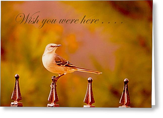 Wildlife Celebration Greeting Cards - Wish you were here.. Greeting Card by Angelika Sauer