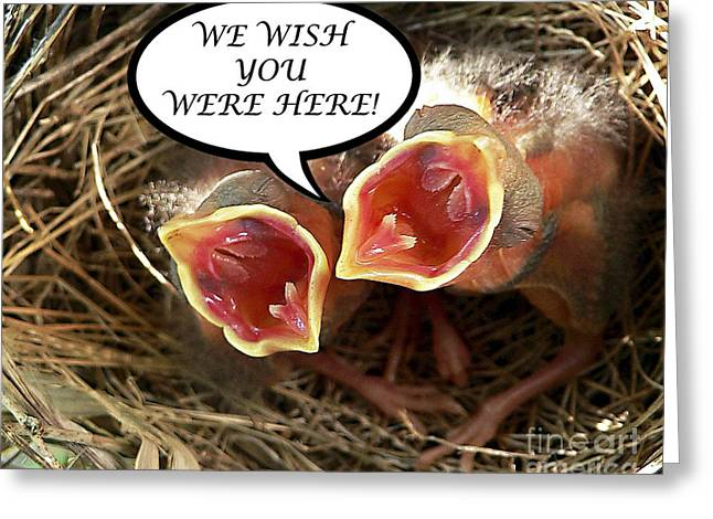 Baby Bird Greeting Cards - WISH YOU WERE HERE Greeting Card Greeting Card by Al Powell Photography USA