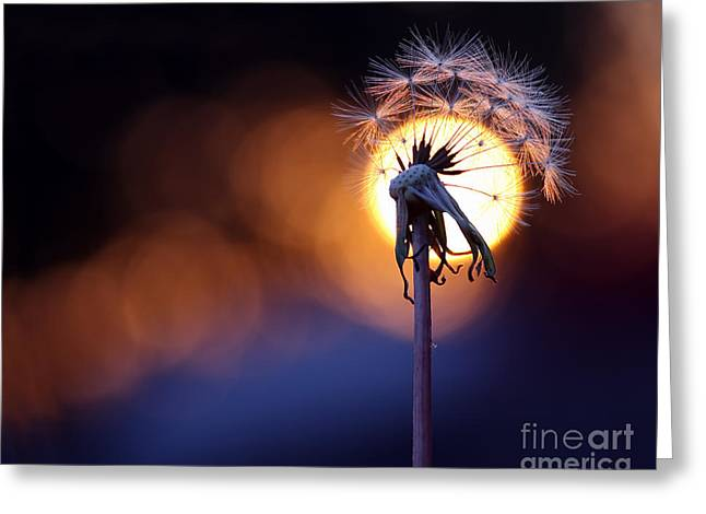 Colorful Dandelions Greeting Cards - Wishful Sunset Greeting Card by Brandon Alms