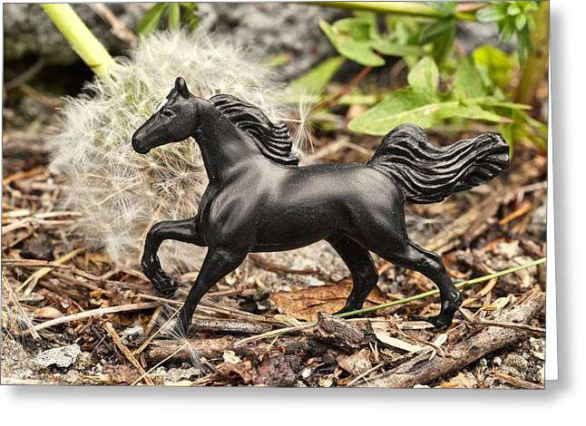 Imagination Greeting Cards - Wishing Horse Greeting Card by Jeff  Gettis