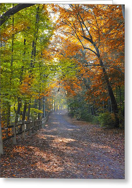 Wissahickon Greeting Cards - Wissahickon Trails in Autumn Greeting Card by Bill Cannon