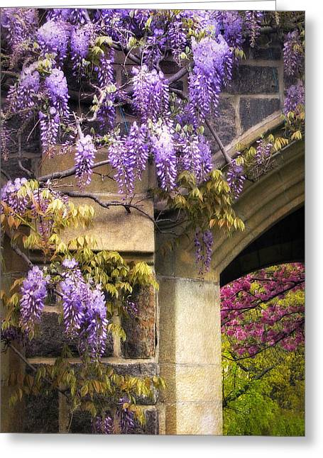 Climbing Digital Greeting Cards - Wisteria Blossom Greeting Card by Jessica Jenney