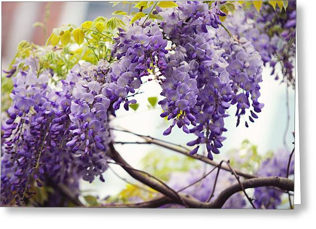 Wisteria Leaves Greeting Cards - Wisteria Garden 1 Greeting Card by Jenny Rainbow