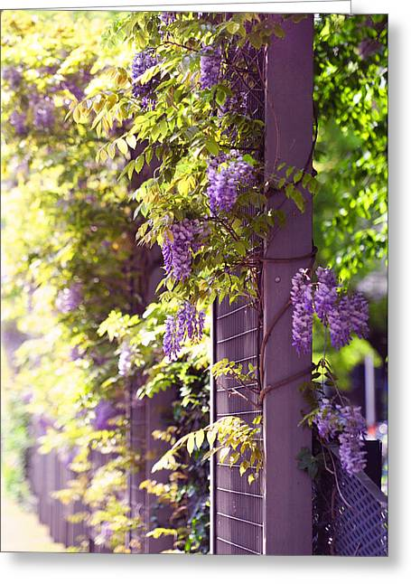 Wisteria Leaves Greeting Cards - Wisteria Garden 10 Greeting Card by Jenny Rainbow