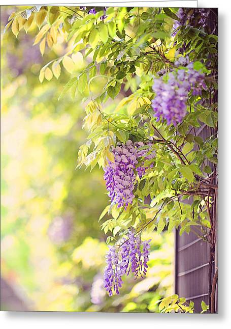 Wisteria Leaves Greeting Cards - Wisteria Garden 11 Greeting Card by Jenny Rainbow