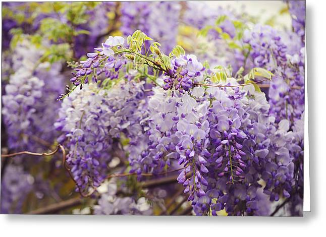 Wisteria Leaves Greeting Cards - Wisteria Garden 2 Greeting Card by Jenny Rainbow
