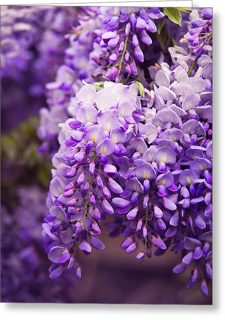 Wisteria Leaves Greeting Cards - Wisteria Garden 3 Greeting Card by Jenny Rainbow