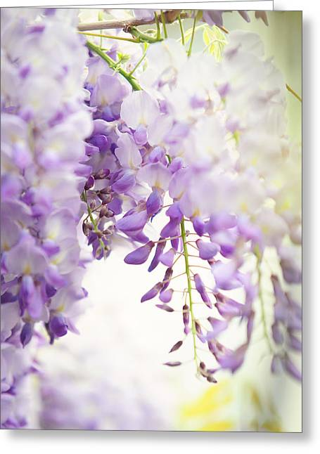 Wisteria Leaves Greeting Cards - Wisteria Garden 5 Greeting Card by Jenny Rainbow