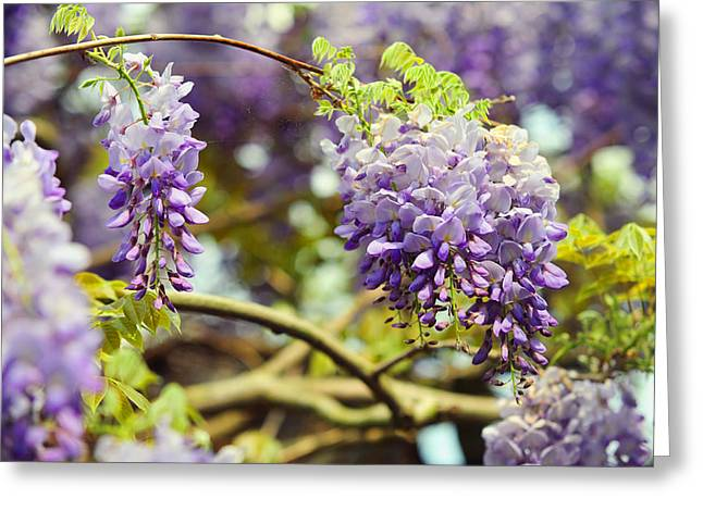 Wisteria Leaves Greeting Cards - Wisteria Garden 7 Greeting Card by Jenny Rainbow